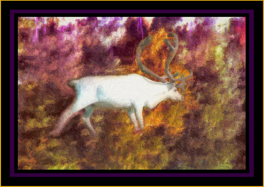 """Reindeer Dream - Finland, Lappland"" : Real World : American artist digital invention archival artifact color print image emerging capture creative delivery convergent transparency divine delivery infinite universe image writer water dream history painter heartwelder"