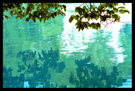 """Reflecting Leaves - Plitvicka Jezera Park lake in Old Yugoslavia, present day Croatia"""